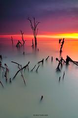 """Serenity in Horror"" (tuan azizi) Tags: blue sunset sea sky cloud reflection beach nature water yellow landscape fire calm serenity malaysia horror moment root scape tranquil pantai selangor vertikal kelanang kualalangat tuanaziziphotography outdoormextreme"