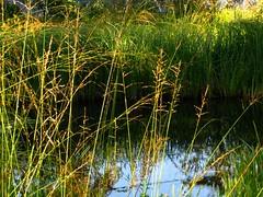 IMG_0478 b (Traud) Tags: lake reflection germany bayern deutschland bavaria sommer gras teich spiegelung laufen