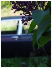 Watercolor (r a p h y) Tags: flower beautiful photography purple lego painted curves jaguar 1970 swoopy xj6
