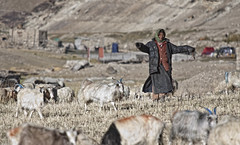 (sami kuosmanen) Tags: people woman india village sheep kashmir tso himalaya ladakh jammu moriri himalaja intia