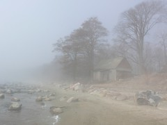 misty day walk (veebruar) Tags: sea fog shore e housetrees vanagram mistydaywalk