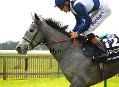 Sky Lantern (hyperionone) Tags: blue horse white classic grey head ascot jockeys jockey winner rails horseracing roberto blitz racehorse mane filly silks richardhughes 1000guineas skylantern throughbred richardhuges richardhannon coronationstakes redclubs turoffoot