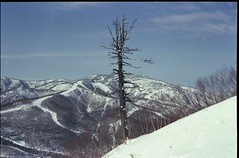 (bensn) Tags: winter mountain snow tree film japan zeiss superia contax carl g2 f2 800 nagano 45mm xtra selfdeveloped