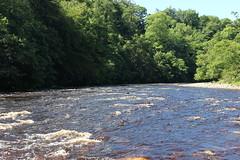 river tees (kokoschka's doll) Tags: river tees teesdale trees pennines