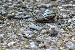 With respect for each other (Nederland in foto's) Tags: friends nature netherlands animal nikon outdoor nederland snail frog natuurfotografie naturephotographer outdoorphotography paulvandevelde pdvandevelde nederlandinfotos padagudaloma