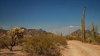 Organ Pipe Cactus National Monument - Puerto Blanco Dr -  Bonita Well
