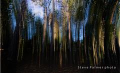 Thetford Forest As You've Never Seen It (Outdoorjive) Tags: other desktop summer flikr forestwood tree mundford england unitedkingdom gb