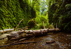 Fern Canyon (TheDailyNathan) Tags: redwoodsnationalpark redwood redwoods redwoodsstatepark prairiecreek ferncanyon ferns canyon deadwood driftwood green gully stream creek river humboldt california 101