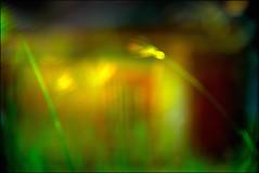 F_DSC7908-Nikon D800E-NIkkor 28-300mm-May Lee  (May-margy) Tags:  home maymargy            1fdsc7908  grassfujian stylebuilding blur bokeh backlight linesformandlightandshadows mylensandmyimagination naturalcoincidencethrumylens kinmencounty fujianprovince repfochina nikond800e nikkor28300mm maylee