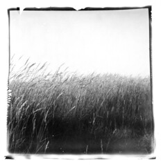 The Seasons Won't Change (Mikah_Manansala) Tags: analogue film filmforever ilovefilm ishootfilm polaroid instant impossible fine art monochrome lift sx70 nature