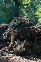 ckuchem-8358 (christine_kuchem) Tags: abholzung baum baumstmme bume einschlag fichten holzeinschlag holzwirtschaft stapel wald waldwirtschaft ste