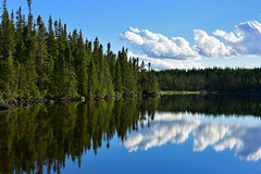 Puddle Pond Reflections (Zircon_215) Tags: puddlepond landscape newfoundlandlandscape pond reflections water trees westernnewfoundland nikond300