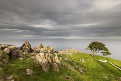 Lone Tree (Eimhear Collins) Tags: lonetree murloughbay countyantrimdusk