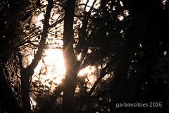Bosque (garbansitoes) Tags: ingenieravelasco losvlez audiovisualesvelasco garbansitoes naturaleza contraluz bosque sierramaralosvlez parquenatural mara almera espaa esp