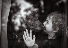 The Kiss (kate.millerwilson) Tags: glass window dog child boy naturallight kiss