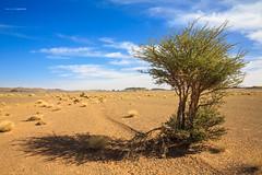 PUPA Desert Expedition 2016-01-08 (tine_stone) Tags: 2016 africa afrika expedition jnner kalendershooting landschaft marokko pupa pupadesertexpedition pantrucksat winter wste desert limitededition onlocation people team tine tinefoto kasbahmoyahut marokko|morocco morocco