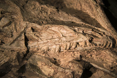 Macro photograph of a dinosaur (Coelophysis) skull, Ghost Ranch, New Mexico (cocoi_m) Tags: macrophotograph macro dinosaur coelophysis skull teeth triassic fossilbearing discovered excavated ghostranch newmexico 220millionyears newmexicostatefossil nature geology paleontology