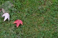(Hst)stmning (P3ab) Tags: fs160918 fotosondag stmning hst autum outdoor