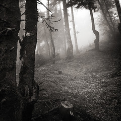 Into the forest V (ilias varelas) Tags: forest trees greece ilias blackandwhite bw mood mono monochrome mist fog field light landscape varelas atmosphere woods