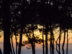 2728-2016-BR (elfer) Tags: bosques puestasdesol ericeira portugal