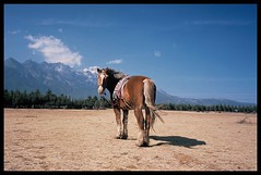 Shangri-la (lingstonegg) Tags: chorme horse shangrila china film g28