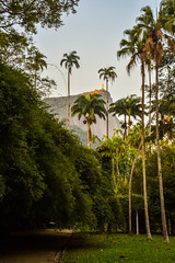 DSC_5390 (sergeysemendyaev) Tags: 2016 rio riodejaneiro brazil jardimbotanico botanicgarden     outdoor nature plants   palms   green  beauty