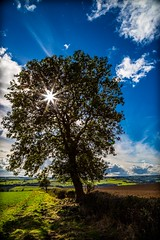 Tree of light. (CWhatPhotos) Tags: cwhatphotos camera photographs photograph pics pictures pic picture image images foto fotos photography artistic that have which contain sky skies sun light nature natural above world blue sunlight canon 5d iii mk clouds cloud durham county north east england uk burnhope september autumn day tr trees