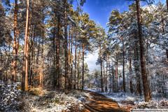 Path Throw The Snow (Marc G.C.) Tags: blue trees winter sky sunlight white snow cold rural forest landscape outdoors woods mud snowy path sunny catalonia pines moia castellterol