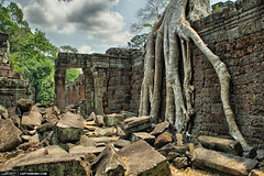 Tree-Root-at-Ancient-Temple-Angkor-Wat-Cambodia