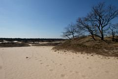 Wandeling Drunense Duinen-13 (vdrpijl) Tags: april drunenseduinen 2013