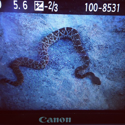 Preview of our snake encounter. #instasnake #latergram