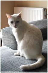 Nekki! (anna punx) Tags: blanco cat negro sofa gato macho dormir suave gatito peluche nekko bostezo aranda calido