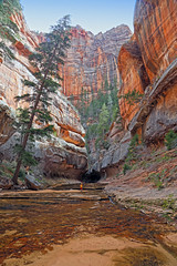 "Left Fork Canyon, entrance to the ""Subway"", Zion National Park (i8seattle) Tags: subway utah spring desert zion angelslanding zionnationalpark slotcanyon thesubway zioncanyon droh hiddencanyon dailyray leftfork dailyrayofhope leftforkcanyon dailyrayofhope2013"