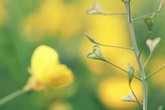 love tree (zozoros) Tags: plant flower love primavera spring heart fiore cuore amore macroenaturaripresadavicino