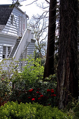 House and garden (joybidge (back from vacation)) Tags: victoriabc naturepatternscanada trishcanada tsapril202013
