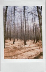 1_0009_NEW (Suniko) Tags: autumn trees film forest dead spring woods empty instant fujifilm chilly hollow