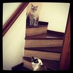 Subida de escada de obstáculos thumbnail