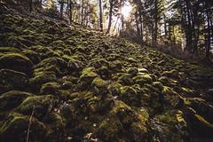 Rocks [03.30.13] (Andrew H Wagner | AHWagner Photo) Tags: statepark sun sunlight nature canon eos moss rocks flare rays ponderosa f28 burneyfalls burney highway89 14mm 14l f28l mcarthurburneyfallsmemorialstatepark mcarthurburneyfalls memorialstatepark 5dmkiii 5dmk3 5d3 5dmarkiii 5dmark3