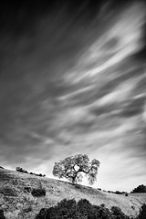 Standalone (Ron Rothbart) Tags: california longexposure blackandwhite bw tree monochrome clouds nd brionesreservoir neutraldensityfilter 10stopfilter