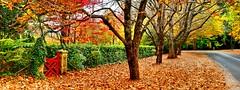 Little Red Gate (evangelique) Tags: autumn red orange color colour fall leaves yellow garden gate mt path cottage peaceful australia bluemountains mount nsw wilson picturesque tranquil mountwilson windyridge