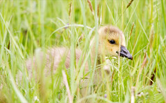 Hiding in the Grass (alone68) Tags: london nature canon barnes wwt