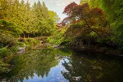 Maple Pond at the Arboretum (Tom Ringold) Tags: seattle tree washington maple unitedstates arboretum refection