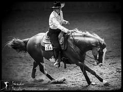 Western & Rodeo in B&W (stendar) Tags: ranch blue horse west amazon cowboy poland western rider stable saddle horseriding quarterhorse bridle lodz horsemanship aph aqha campoverde westernhorsemanship trailopen apallosa polishquarterhorseassociation westernhorsemanshipamateur westernpleasureyouth reiningyouth13under westernpleasureopen jackpotreining reiningyouth trailyouth youth13underclassinclass reiningjunioropen ladiesreining reiningsenioropen westernridingopen westernpleasureamateur reiningamateur superhorsetrailamator westernhorsemanshipyouthiyouth13under