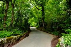 Country lane near Shaugh Bridge, Devon (Baz Richardson (now away until 30 July)) Tags: devon dartmoor shaughbridge countrylanes trees woods