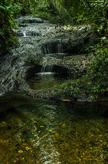 _NGE7678.jpg (Nico_GE) Tags: selvahumedatropical colombia sancipriano pacifico comunidadesafro valledelcauca co