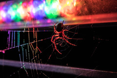 Psychedelic spidy (sykora_greg) Tags: sigma 1770 nikon d3300 spider cracow kraków