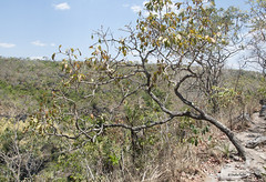 T4352x2868-00004-0-0 (Stella Pado) Tags: brasil gois alto paraso de parque nacional da chapada dos veadeiros national park cerrado trilha hiking treeking nature natureza paisagem landscape