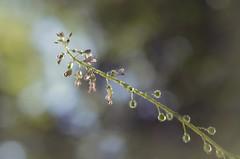 Moi je t'offrirais des perles de pluie... (6line8) Tags: rose waterdrops flower fleur