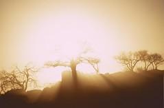 Botswana 2004 (patrikmloeff) Tags: sun sonnen soleil sonnenuntergang sunset soleilcochant tree trees arbres arbre baum bume kubu kubuisland baobab botswana afrika africa afrique african afrikanisch summer sommer ete travel traveling reise reisen voyage urlaub ferien vacances holiday holidays erde earth terre monde world welt abenteuer adventure safari natur nature landschaft landscape paysage southernafrica sdlichesafrika outdoor beautiful