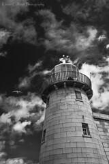 Howth lighthouse (Kieran Culleton) Tags: light ligthouse canon eos bw black white flickheroes flickrfriday landscape ireland dublin howth 24105 bird seagull wildlife